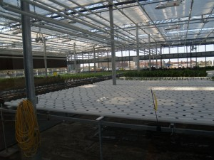 The greenhouse is divided into separate climatic zones. Zone 1 is reserved for herbs, arugula, lettuce, swiss chard and bok choi