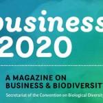 Business 2020 November 2011